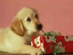 perro-regalo-navidad